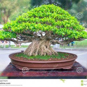 Plantas Verdes y Bonsáis