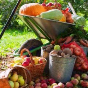Frutas,Vegetales y Plantas Aromáticas