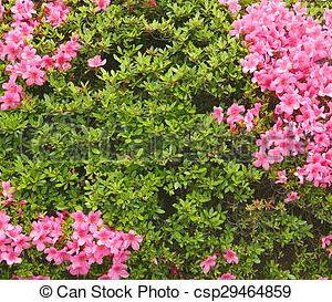 Plantas Verdes y en Flor